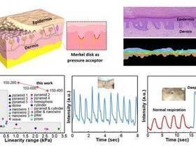 仿生石墨烯压力传感器技术研究取得重要进展